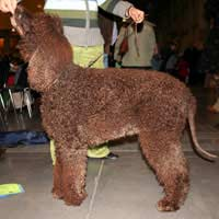 Exhibitor Dog Shows Training Classes