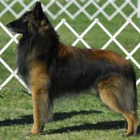 Judge Kennel Club Integrity Championship